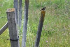 2redwingblackbirds