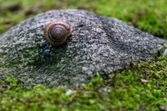 snailrocksylvan