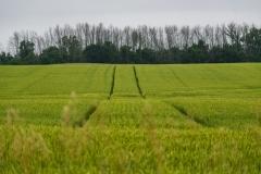 sprayertraxwheat