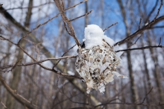 white_Birch_nest