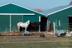 bwhorses