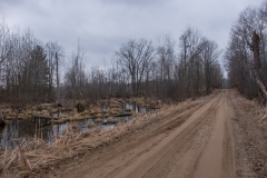 swamproads1