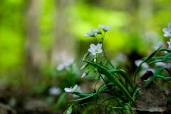Wild_Flowers_1