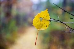 leafhole