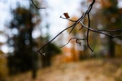 leaflessandsad