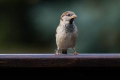 lookawaybird