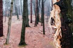 tatteredtree