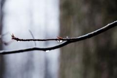 waterthorn