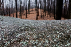 woodsoverrock