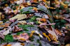 leaf_log_deerfield