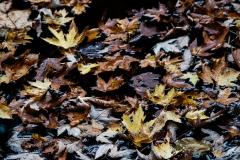leafy_Swamp_frogseen