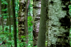 morewoods