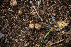 acornfalls