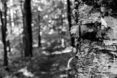 treeandtail