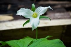 anotherflower
