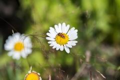 bigbugflower