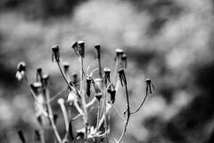 dead_flowers