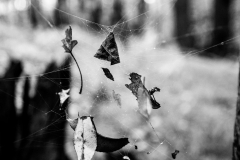 web_of_leaves
