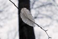 leafstraddle