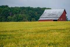 barngreenwheat