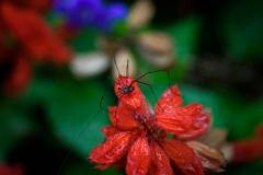 BIG_ol_Spider
