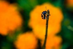 orangeorblack