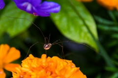 spiderorange