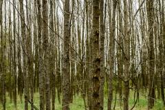 SylvanTrees