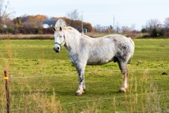 whitwholewhorse
