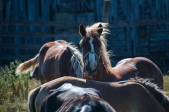 horsefaceamongothers