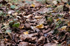 leaves_down_105