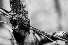 Bw_Tree_Barb