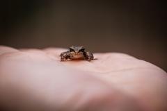 Ikeeptryingfrog