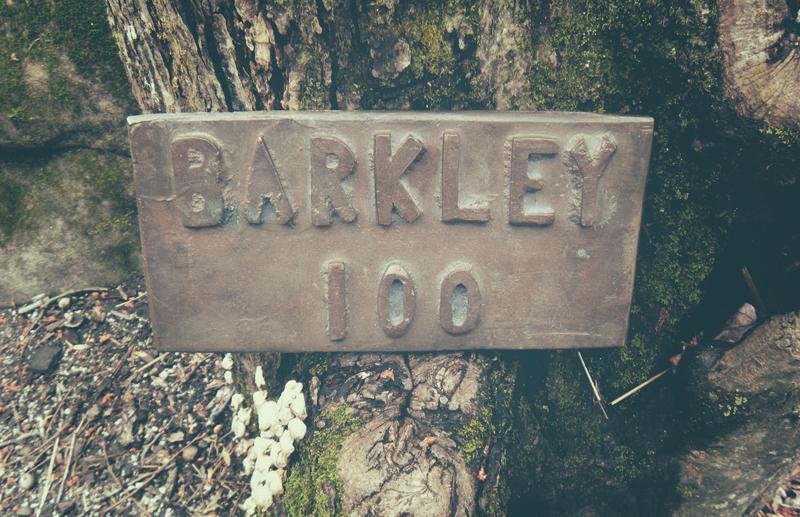 bark100pic