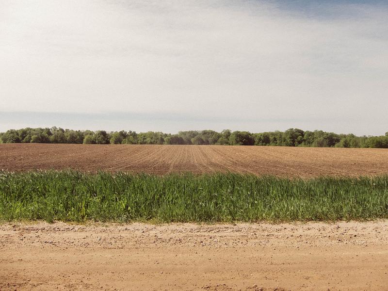 treesplowedgrassdirtroad
