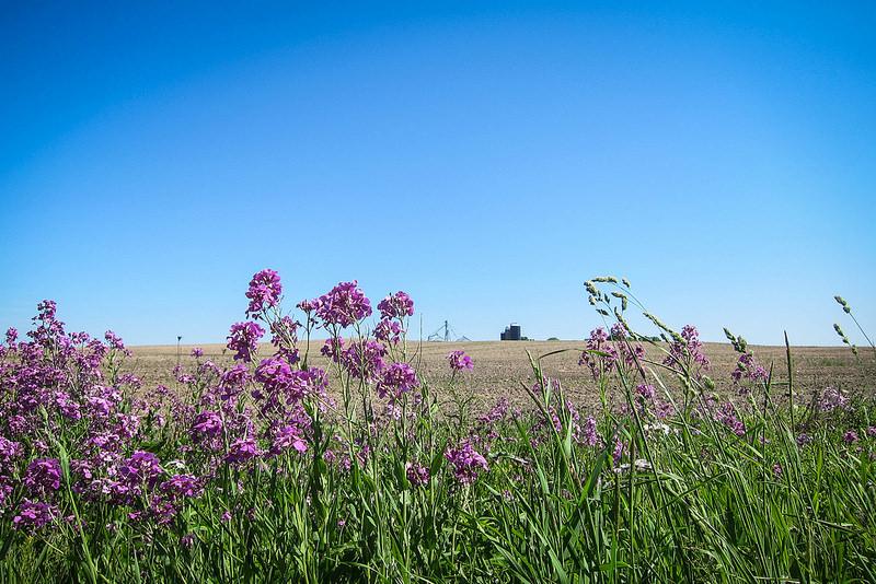 flowersandgrainfieldsetc