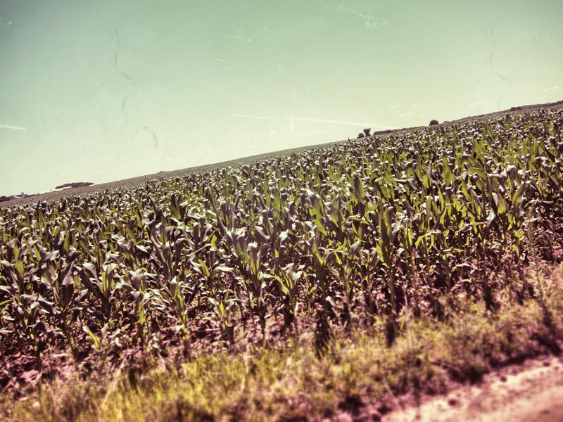 corngrowingandstuff