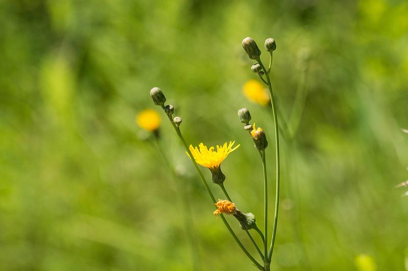 crapflowers