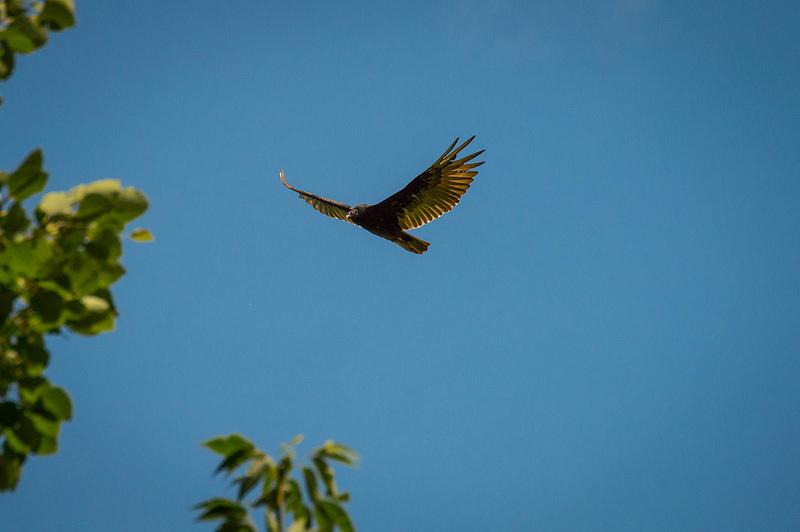 lopeyedbird