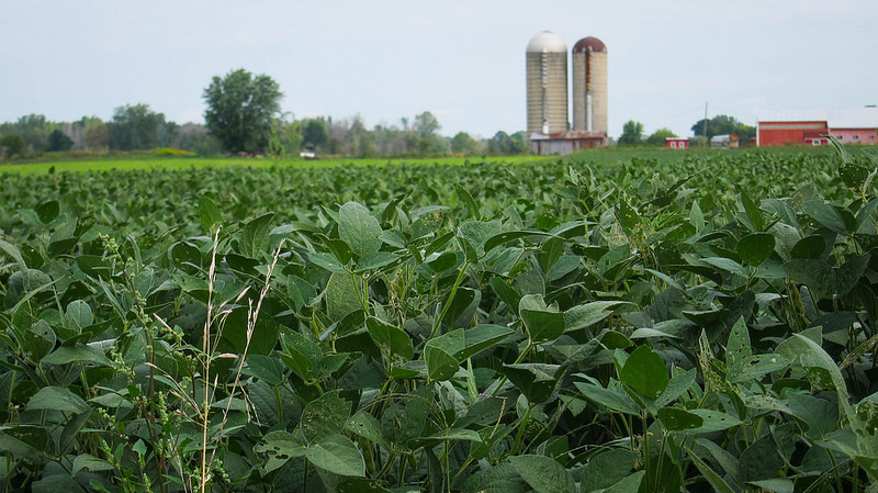 Beans_and_silos