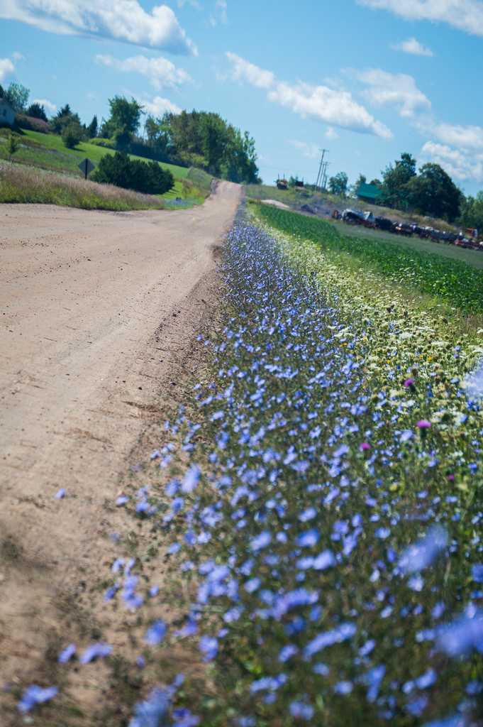 dirtroadflowers