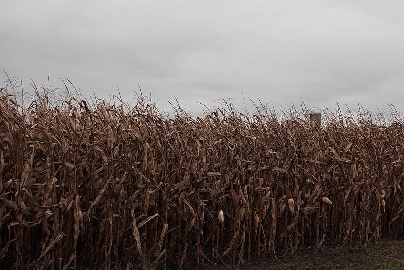 Corn_Silo_Fall