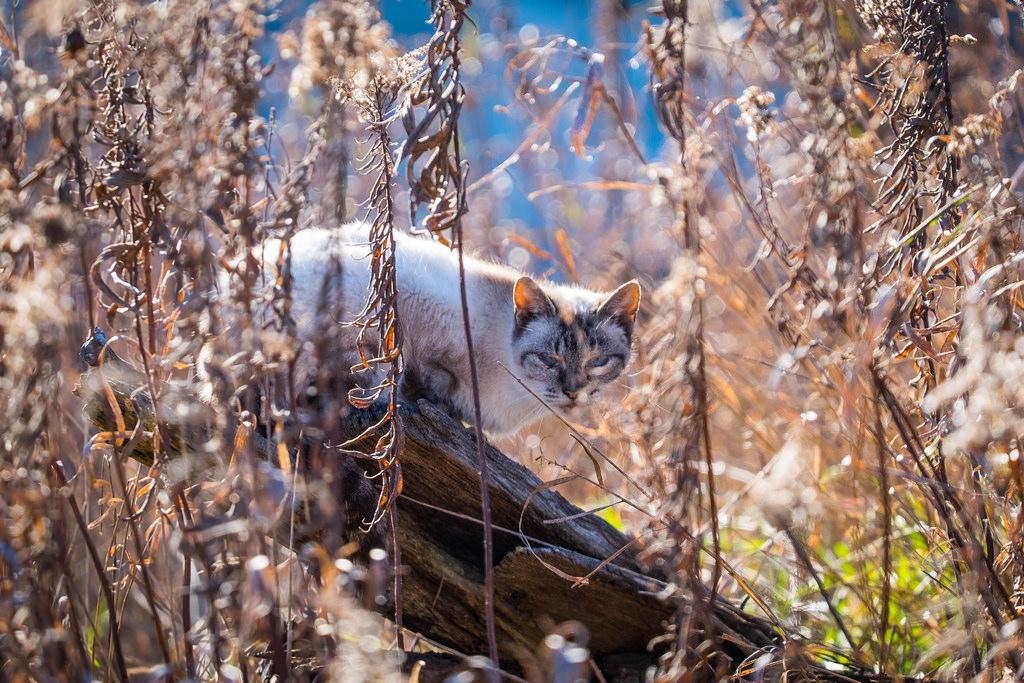A wild farm cat.