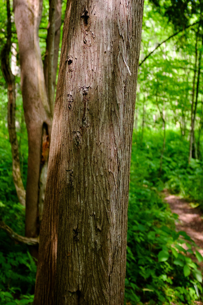 tree-trail-background
