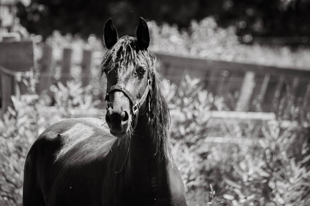 horse-portrait-bw-1