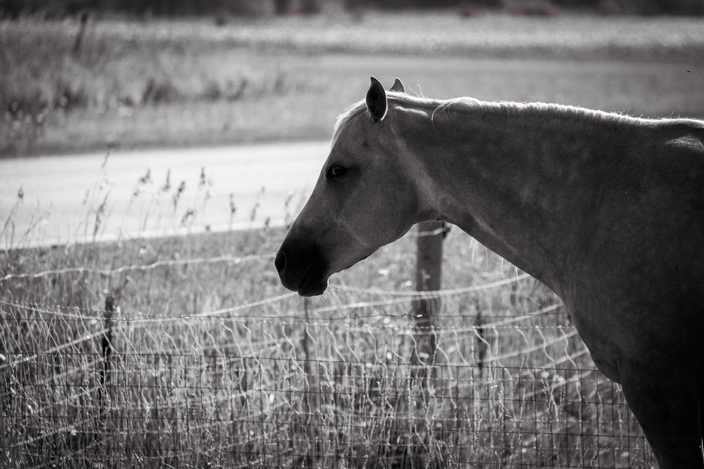 leery-horse