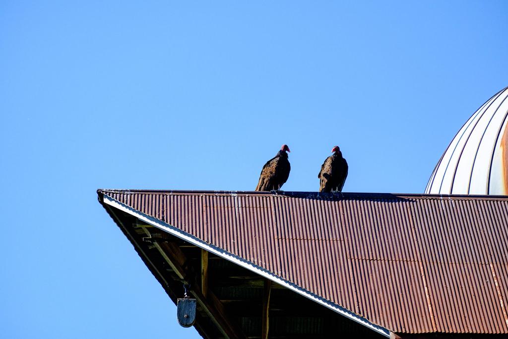 turkey-vultures-barn