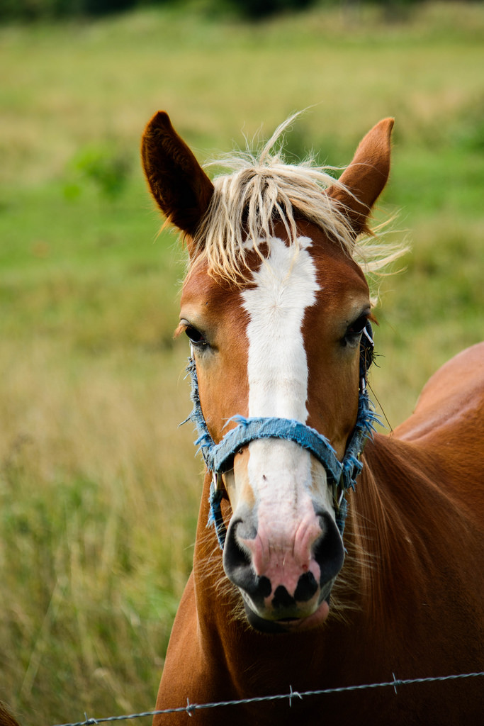 another-horse-portrait