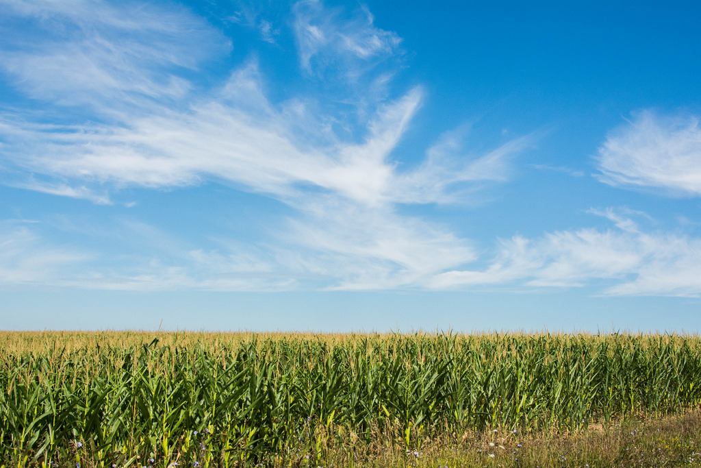 blue-sky-clouds-corn