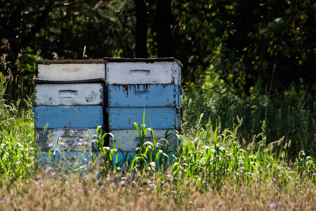 box-of-bees-blue-white